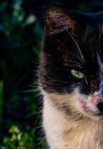 cat hot spot treatment